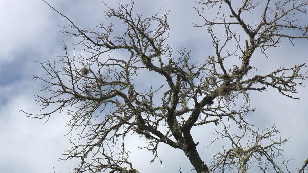 ms tree still_1568654584890.jpg