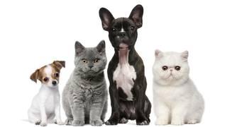 Three surprising ways to save money on pet care
