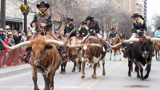WATCH LIVE: 2019 Western Heritage Parade & Cattle Drive press conference