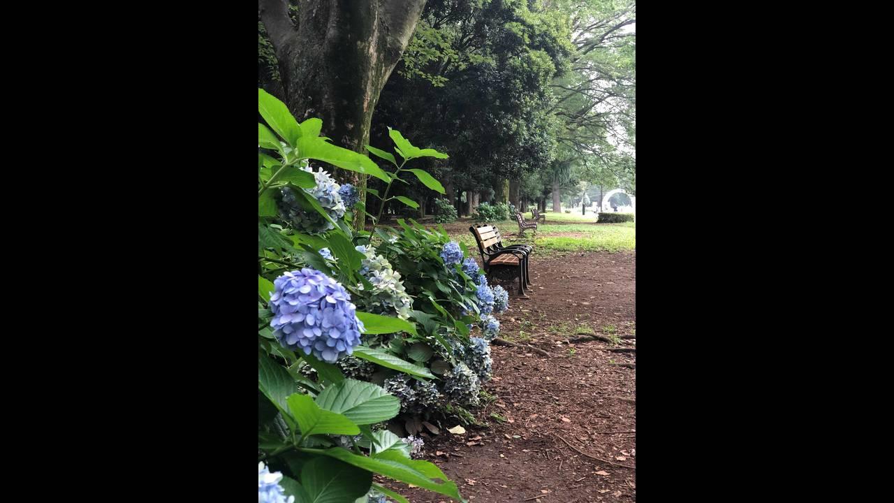 Yoyogi park 2_1563847081370.jpg.jpg