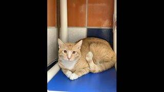 Adoptable cats for May 17-24