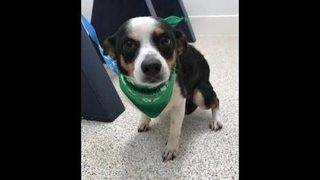 Adoptable dogs for May 17-24
