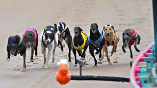 Supreme Court asked to block dog racing measure