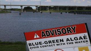 Blue-green algae: An explainer on the sludge blanketing Lake Okeechobee