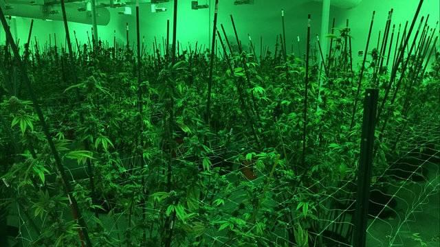 Detroit million-dollar marijuana bust 13