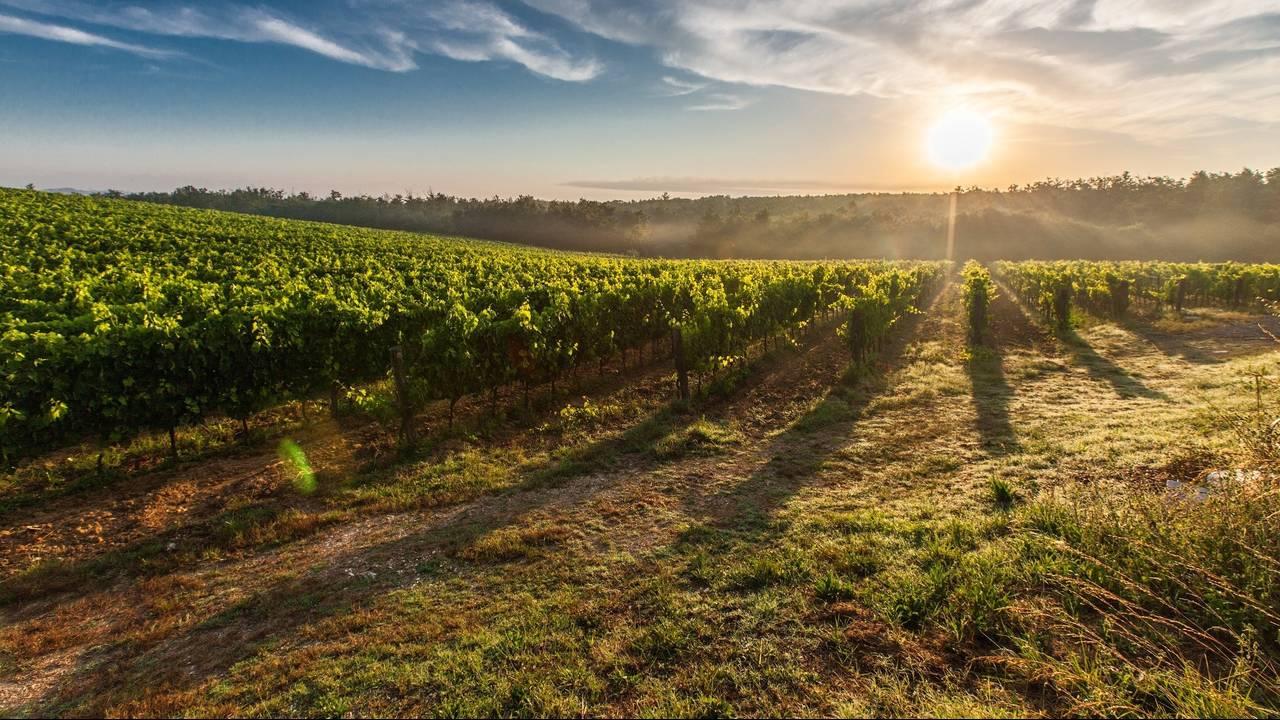 wine-tasting-pexels-generic.jpg