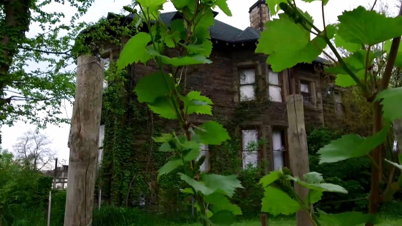 Detroit Vineyards looks like chateau_1530620306471.jpg.jpg