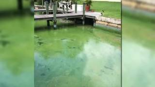 Gulf Coast beaches closed due to algae bloom