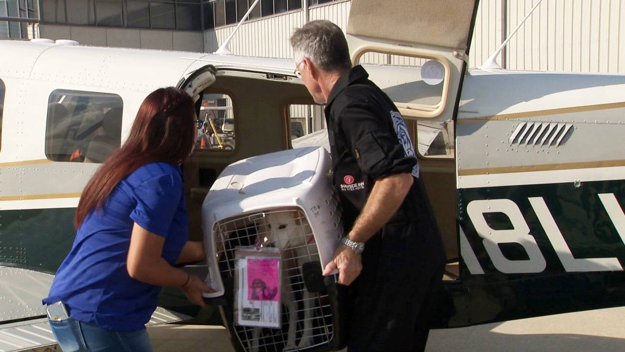 dogs flown out of texas to PA