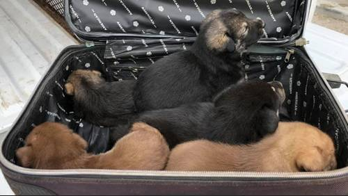 5 puppies found in suitcase, abandoned in Fort Bend County park