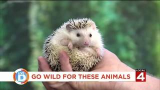 Go wild for these animals