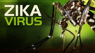 The Urgency In Fighting Childhood >> Mosquito Season Brings No Urgency For Money To Fight Zika