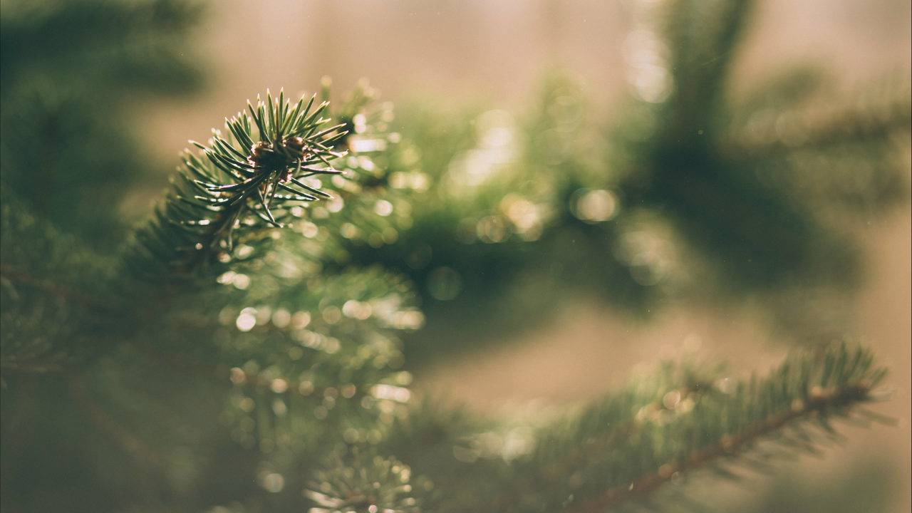 Merry Sneezemas! Christmas Trees Bring Mold Into Homes