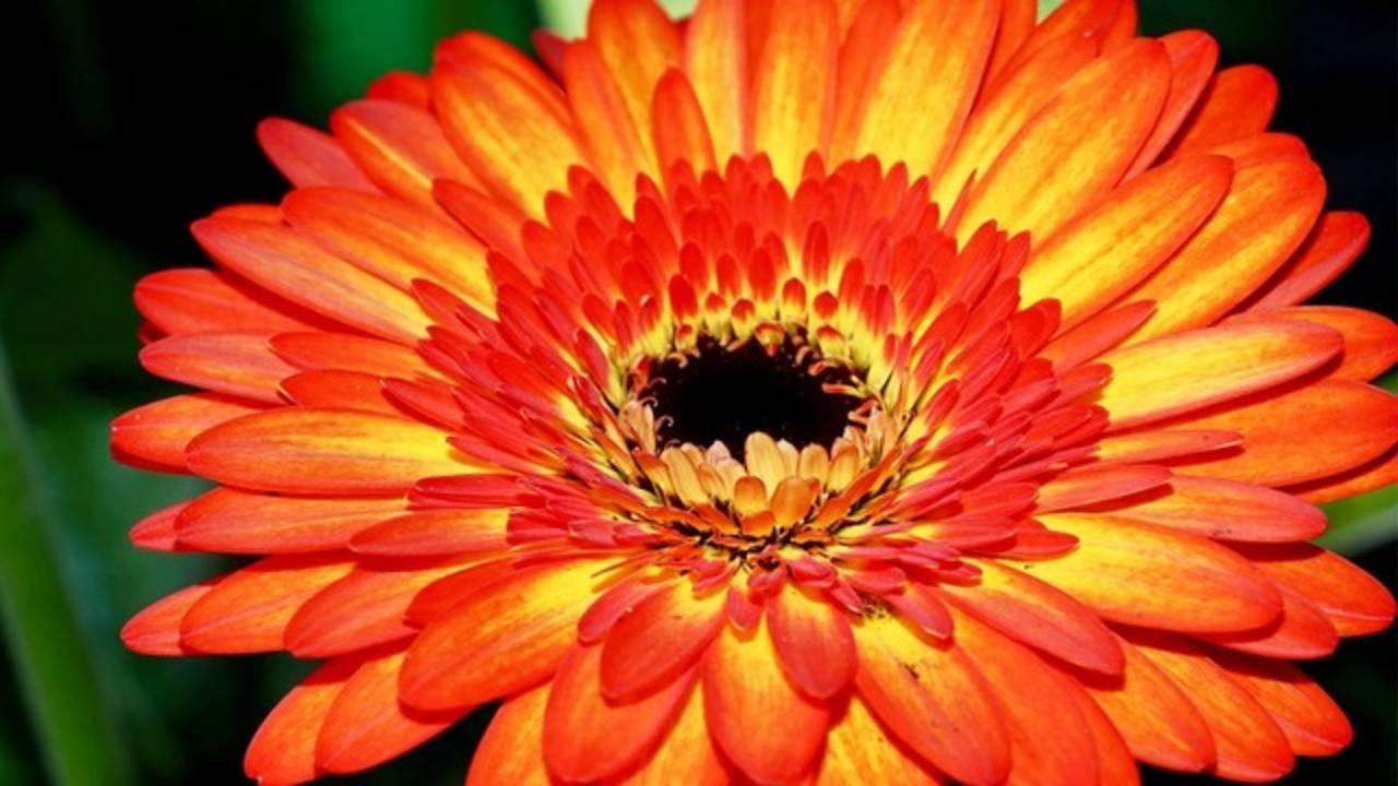 HEB Flower 5_1522255180509.png.jpg