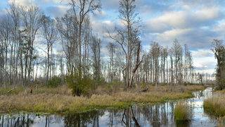 Company says it can safely mine near Okefenokee refuge