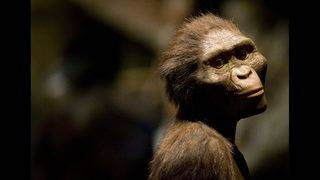 Today's apes may be smarter than our evolutionary ancestors