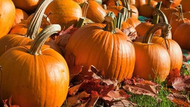 halloween fall events across metro detroit