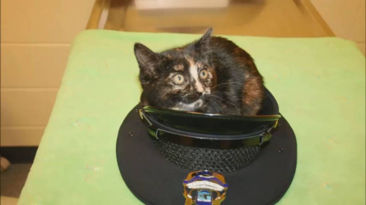 Livonia police officer rescues cat 2