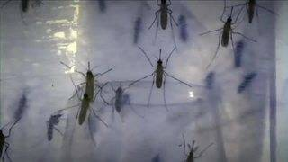 Sexually transmitted case of Zika reported in Miami-Dade County