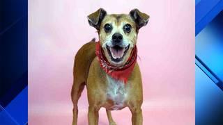Adopt a pet: Meet Ellie