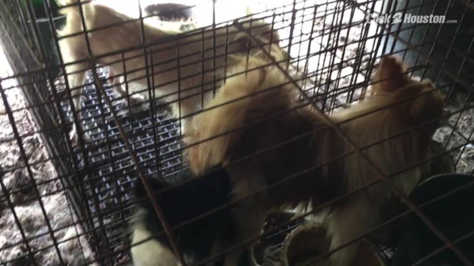 Animals seized in Grimes County20180816221627.jpg