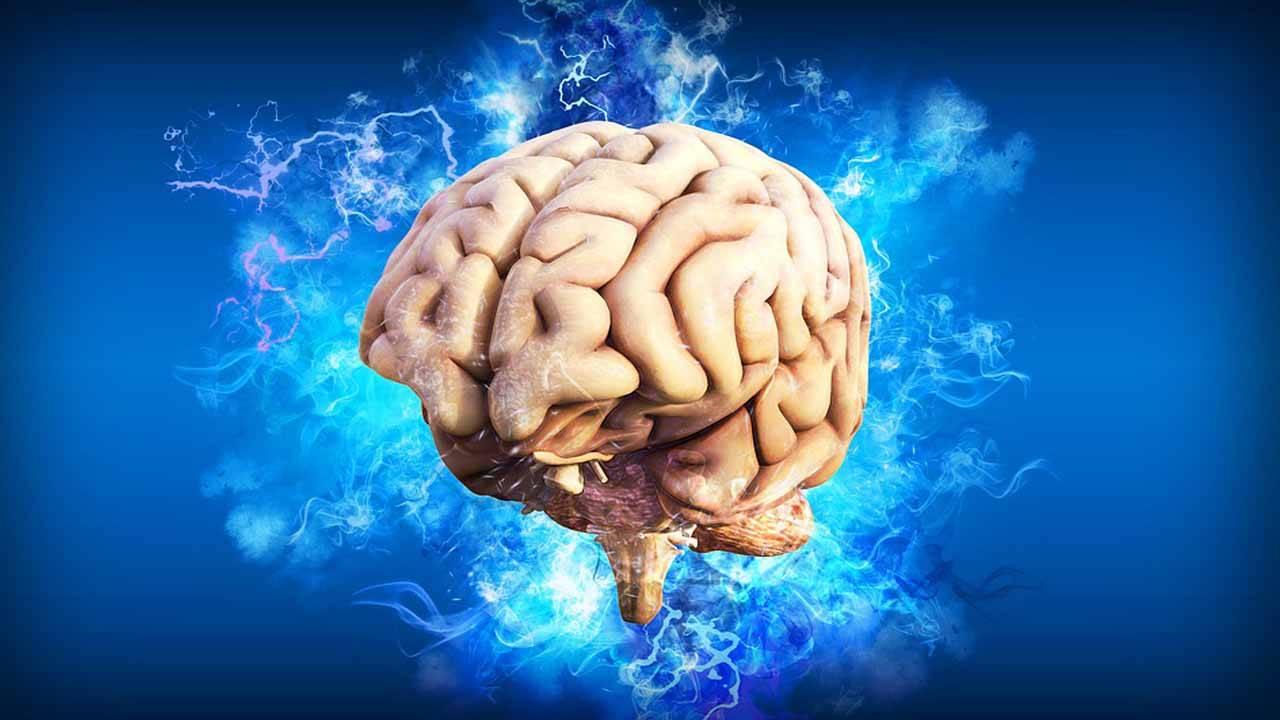 brain_1564421532071.jpg