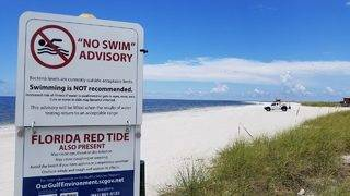 Additional $3 million given to Florida communities impacted by red tide
