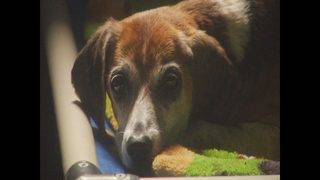 Franklin County Humane Society and Adoption Center pets, staff left in&hellip&#x3b;