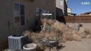 California town overwhelmed by tumbleweeds
