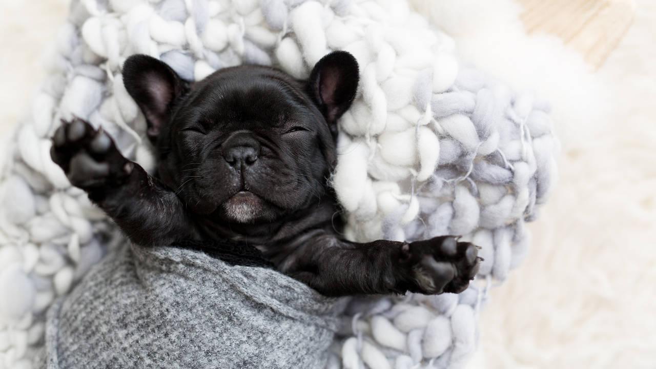 Olive Puppy Newborn-Olive Puppy Newborn-0047.jpg