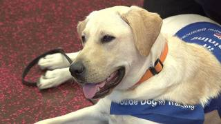 WATCH: Checking in with KSAT 12's guide dog Gino in Houston