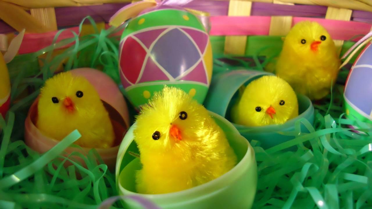 toy chicks in Easter egg basket14333970-75042528
