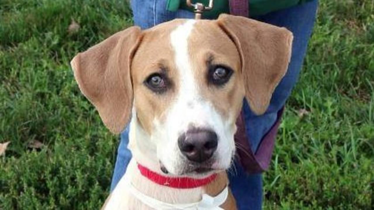 Humane Society of Huron Valley Pup.jpg