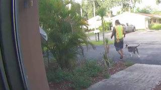 Man caught on camera stealing pit bull puppy in Davie