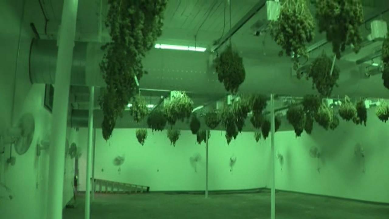 6 people arrested in million-dollar marijuana bust on