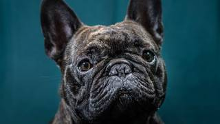 Pet travel: dog caregiver and transporter share tips and options