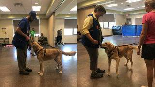 Dog training blog week 4: Trying to learn 'most important behavior to&hellip&#x3b;