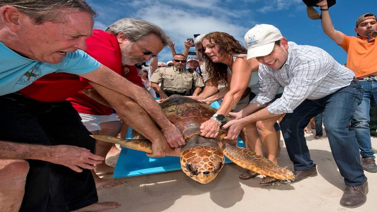 Rubio helping release sea turtle