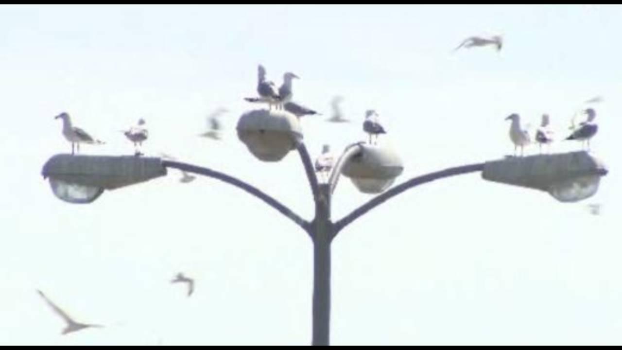 Seagulls shot at abandoned car dealership_15335044