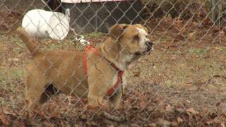 Dog tethering debate continues in Nassau County