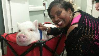Pig brings laughter, smiles as part of pet therapy