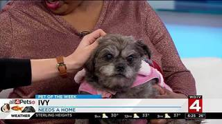 Pet of the week: Ivy the dog likes bacon and people