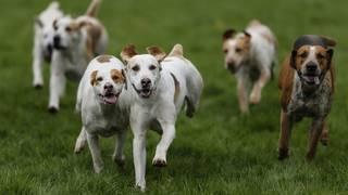 New Michigan Humane Society program makes pets free for active duty&hellip&#x3b;
