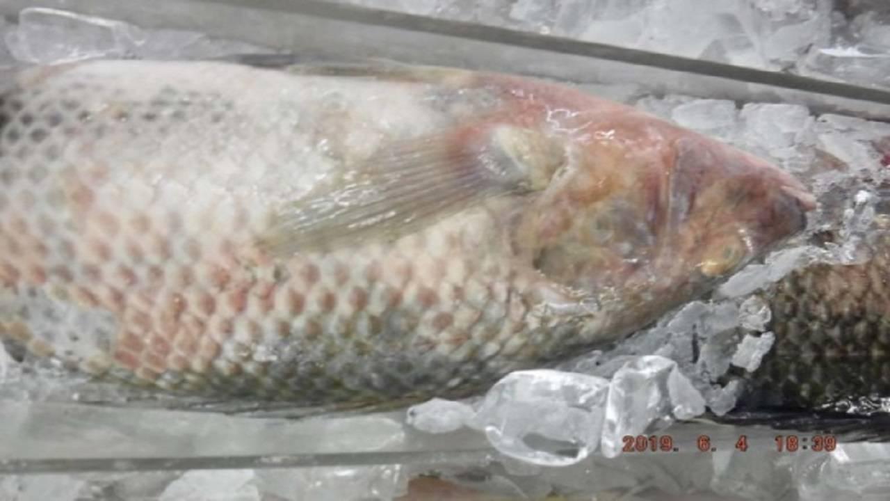 Fish 2 at China Supermarket