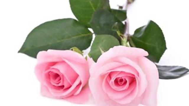What do valentine flowers really mean mightylinksfo