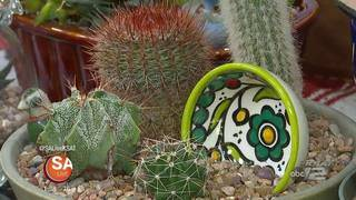 Get CRAZY for CACTI this Season