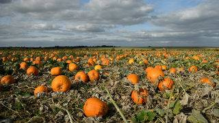 Booo-lish on profits: Why Halloween is big business