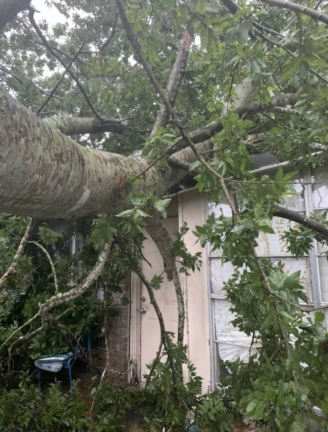 Tree damage on Hillcrest Dr in Missouri City, texas