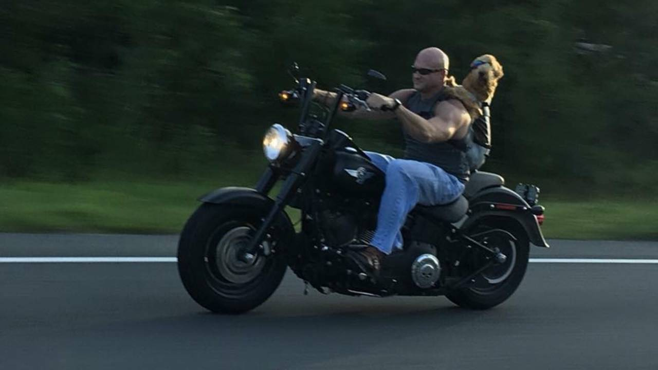 Dog rides on motorcycle in Jacksonville