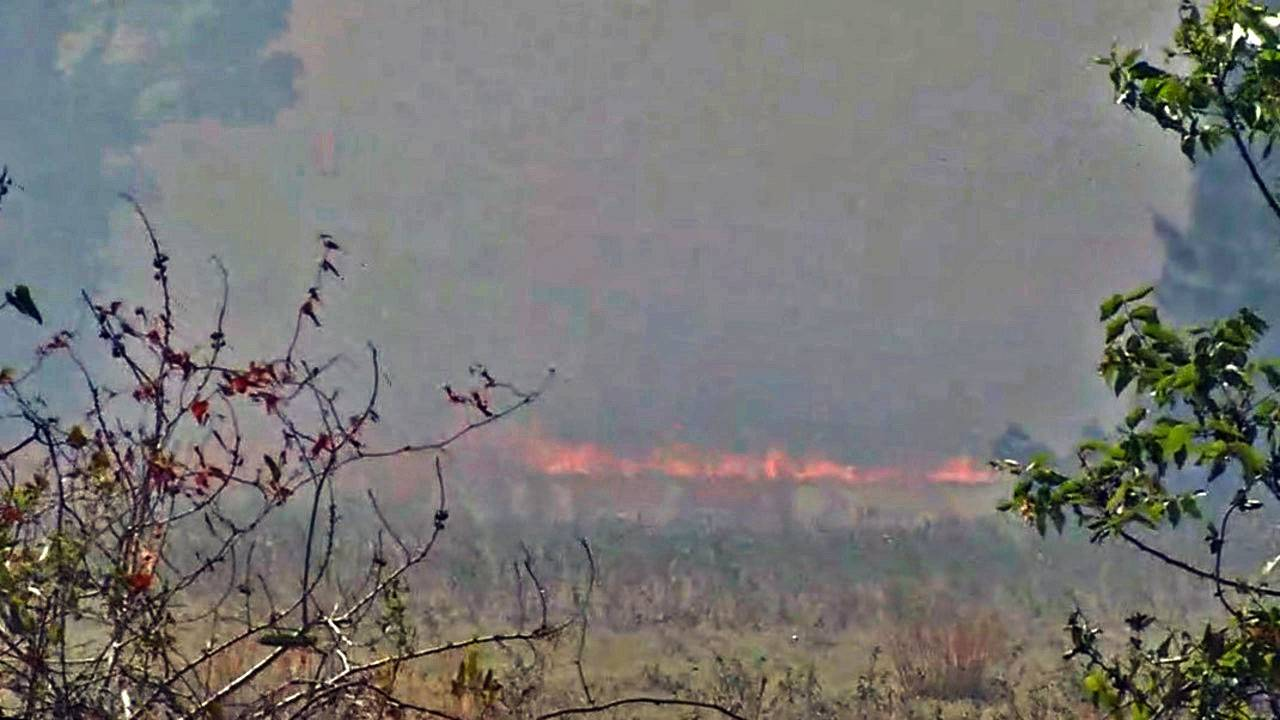 Yulee-Brush-fire-flames